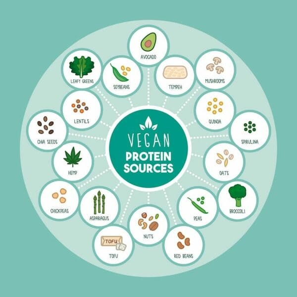 El Consumo De Proteína