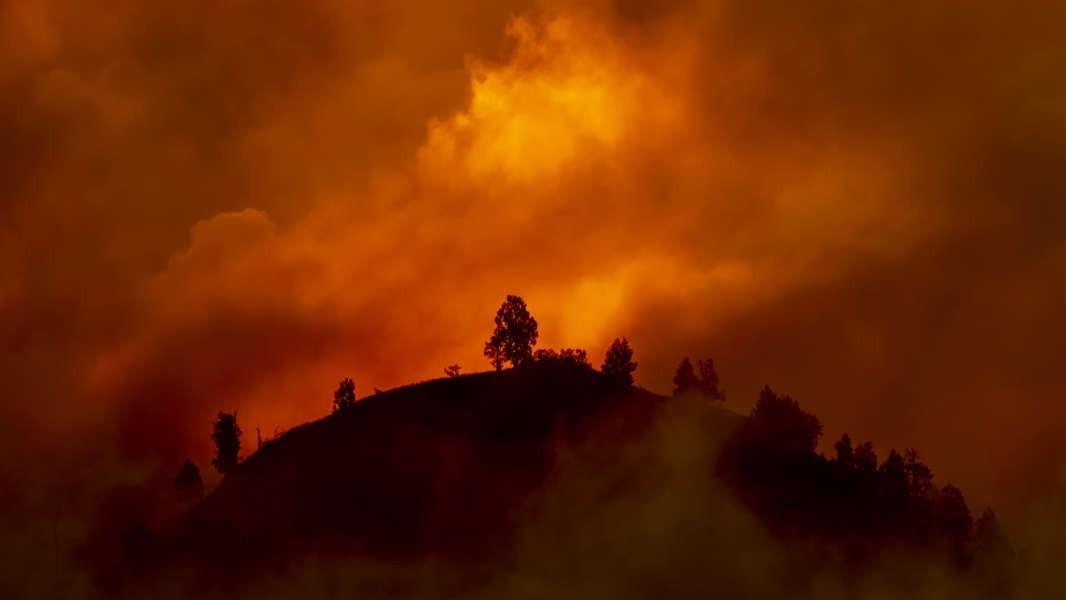 O que podemos fazer para impedir os incêndios florestais?