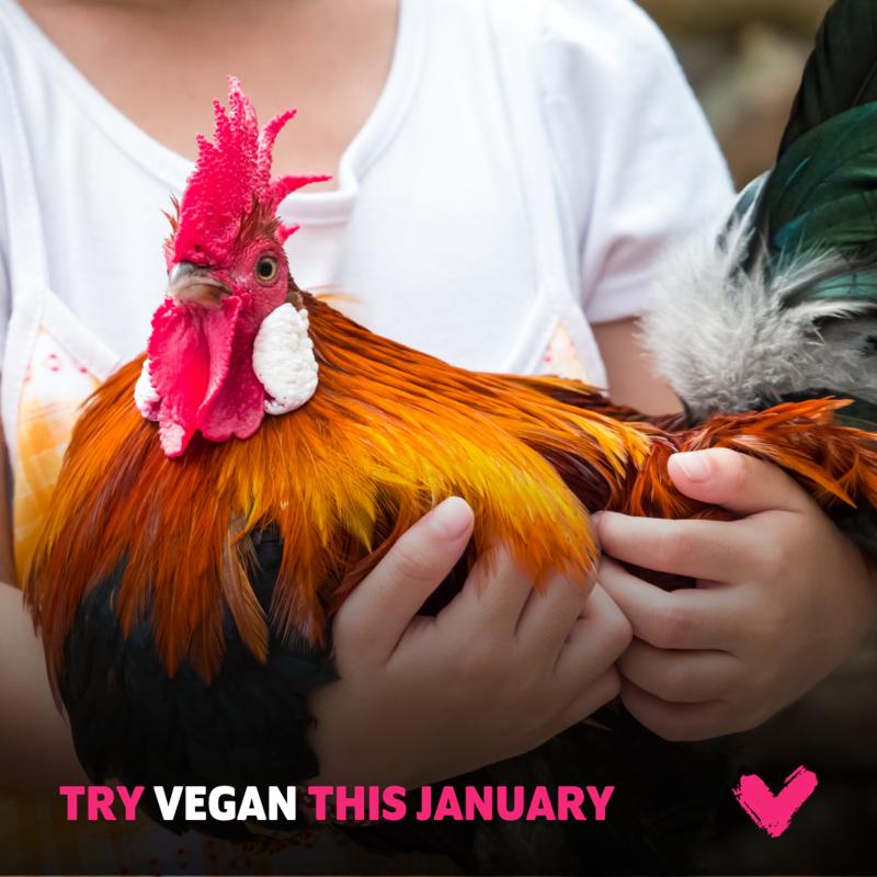 Veganuary: 1 mês vegano que mudará a sua vida!