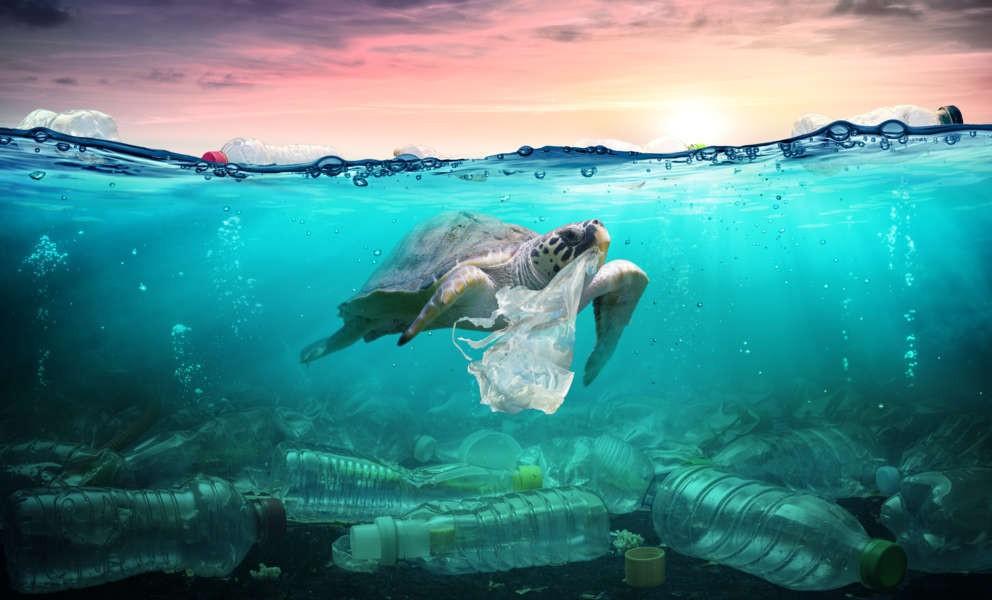El agua es vida: por qué no debemos desperdiciarla ni contaminarla