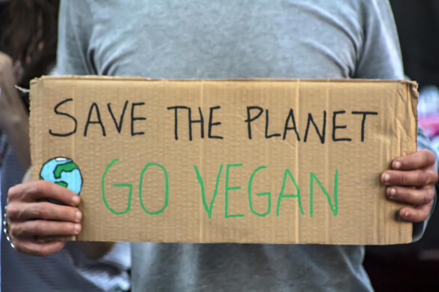 5 razões para te tornares vegan