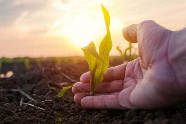 Como É Que Os Superalimentos Nos Ajudam A Preservar A Biodiversidade?